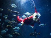 fr.shafaqna - Photo : Père Noël a l'aquarium de paris