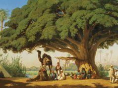 Arbre Coran commentaire du Coran Connaissance coranique éducation coranique études coraniques Explication du Coran Quran l'arbre dans le Coran Le motif et la symbolique de l'arbre dans le Cora
